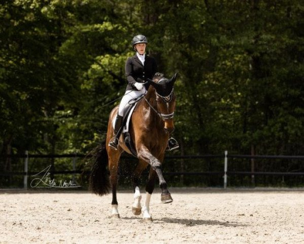dressage horse Fabulous Fritz (Westphalian, 2016, from Florenciano 6)