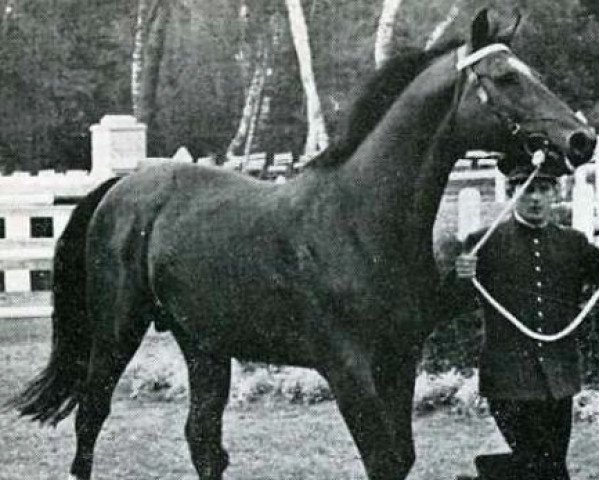 horse Ibrahim AN (Anglo-Norman, 1952, from The Last Orange AN)