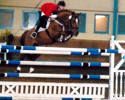 horse Cernunnus von Hof (Swiss Warmblood, 1996, from Calando II)