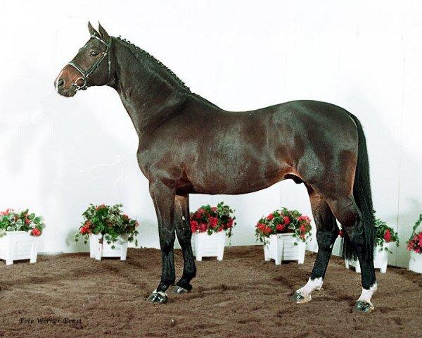 horse Contender (Holsteiner, 1984, from Calypso II)
