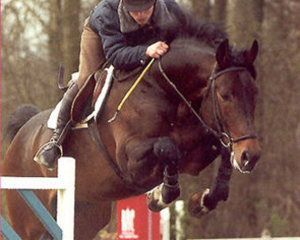 horse Puccini (Hanoverian, 1995, from Pablo)
