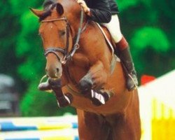horse Acadius (Holsteiner, 1993, from Acord II)