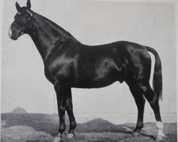 horse Flugfeuer II (Hanoverian, 1921, from Fling)