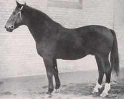 horse Schwabenkoenig I 310260121 (Hanoverian, 1921, from Schwabenstreich)