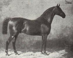 horse Julius (Hanoverian, 1871, from Schlütter)