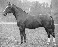 horse Dolman (Hanoverian, 1933, from Detektiv)