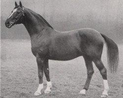 horse Detektiv (Hanoverian, 1922, from Desmond)