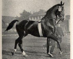 horse Florett 1083 (Hanoverian, 1923, from Fling)