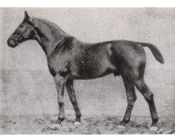 horse Athanas (Hanoverian, 1909, from Altheo)