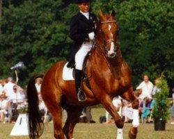 horse Vanitas (Royal Warmblood Studbook of the Netherlands (KWPN), 1979, from Pretendent)