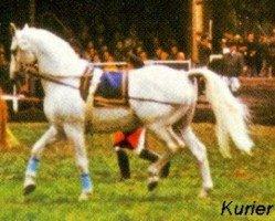 horse Kurier (Hanoverian, 1950, from Kurde x)