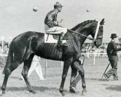 horse Neckar xx (Thoroughbred, 1948, from Ticino xx)