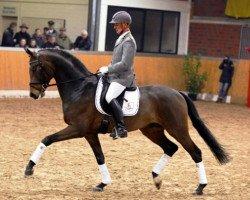 dressage horse Spörcken (Hanoverian, 2008, from Sir Donnerhall I)
