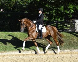 dressage horse Domani (Rhinelander, 2012, from Demirel)