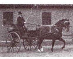 horse Altheo (Hanoverian, 1904, from Alnok)