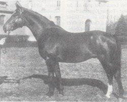 horse Faruk (Hanoverian, 1938, from Florenz)