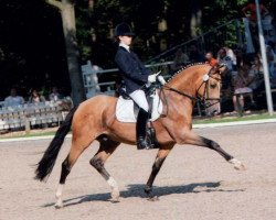 dressage horse FS Champion de Luxe (German Riding Pony, 1998, from FS Cocky Dundee)