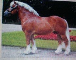 horse Marc (Arden, 1995, from Max de Carlsbourg)