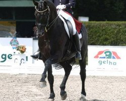 dressage horse Don Frederico (Hanoverian, 1997, from Donnerhall)